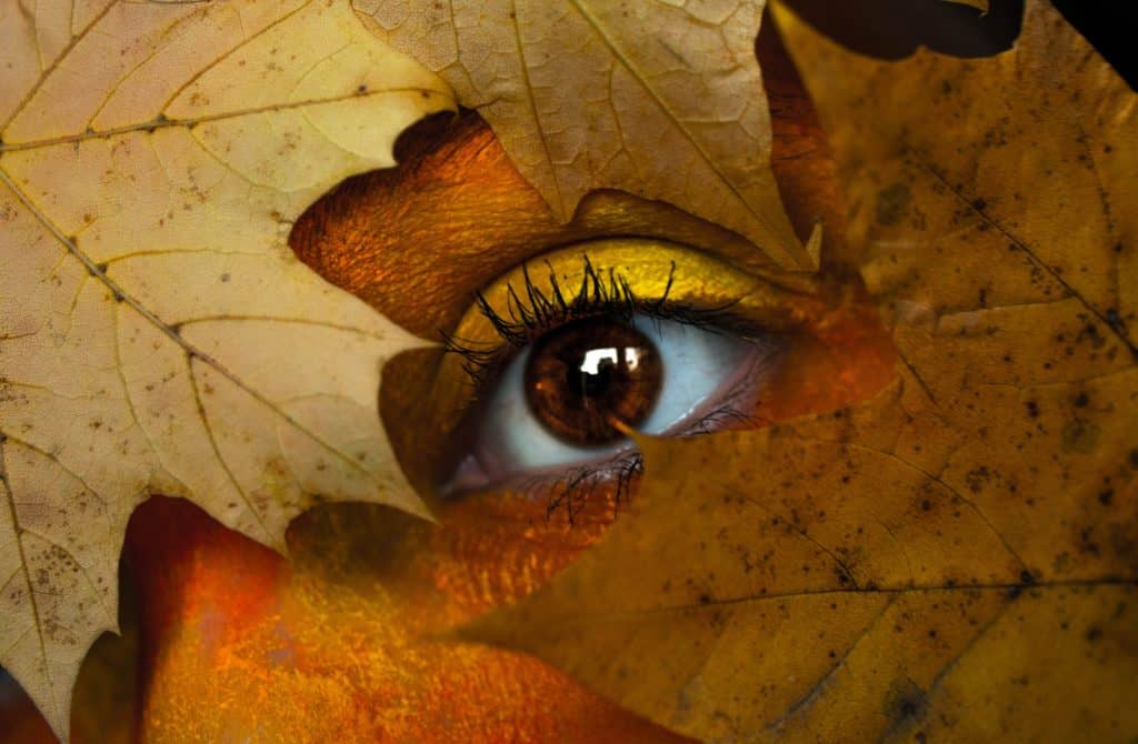 Picture showing a eye in leaves. Reflecting the topic how archery can improve your eyesight.