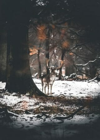 Deer hunting tips for beginner and advanced hunters. This photo is of a deer that is taken by a hunter.